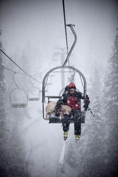 Ski Patrol, dogs, skiing, snow