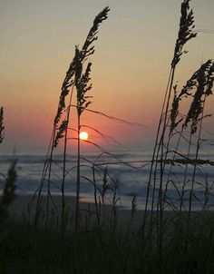 Sunrise between the Seagrass