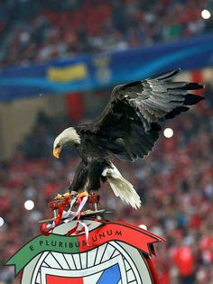 Big Love, First Love, Benfica Wallpaper, Portugal Soccer, Sports Clubs, Bald Eagle, Football, Animals, Harry Potter