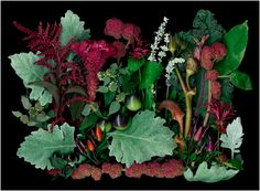 From the Beauty and the Feast Garden at Tower Hill Botanic Gardens - Scanner Photography By Ellen Hoverkamp