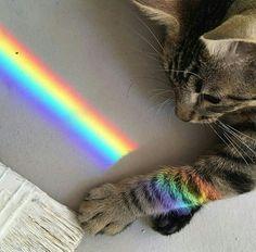 #cat #cute #love #rainbow