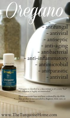 The amazing properties of oregano oil. I take this in a capsule with Thieves {and a carrier oil} to keep sickness away!