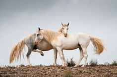 Horse / Expectant - Wild New Mexican Herd by David Cramer