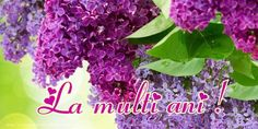 Syringa vulgaris (lilac or common lilac) is a species of flowering plant in the olive family Oleaceae