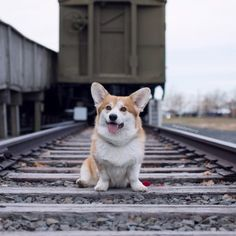 Drewbert the Corgi • Stay on TRACK with your teachings, and you will...