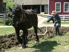 Plowing...it's hard work! This is how my grandfather tilled their garden every year until he died. Grandpa, his mule (Old Kit) and his tiller. Wonderful memories.