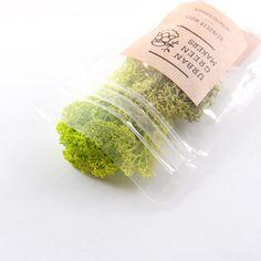 テラリウムに付け足すアレンジ藻 - REINDEER MOSS / 選べる4種類 | MONOCO