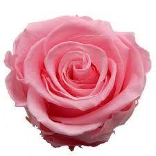 """Résultat de recherche d'images pour """"rose rose"""""""