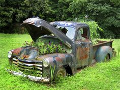 A really old truck has become a container beautiful plants....love this scene!!