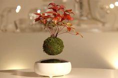 Svävande bonsaiträd har blivit verklighet