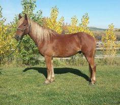 Livestock.com - Livestock ranch and farm classifieds! Buy, Sell, Trade anything! | Livestock.com