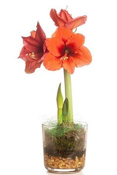 Fungi, Houseplants, Flora, Interior Design, Garden, Inspiration, Nest Design, Biblical Inspiration, Garten