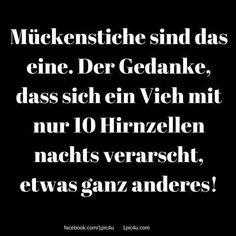 #laugh #lol #lustig #funnypics #sprüchezumnachdenken #laughing #lachflash #instafun #claims #fun