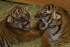 Christopher & Connor when they were newborns.