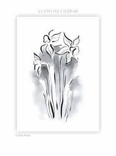 Daffodils art print. Black and white ink sketch. Flowers drawing. Watercolor sketch. White Ink, Black And White, My Flower, Flowers, Watercolor Sketch, Daffodils, Sketches, Art Prints, Wall Art