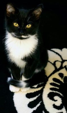 "(*^^*) Tuxedo cat. ""My dear, I'm a cat. Everything I see is mine...."" Rick Riordan, The Red Pyramid"