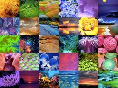 Color in Nature  (XL) (300 pieces)