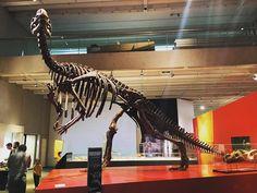 Tyrannosaurus Rex #skeleton at the #Queensland #Museum. #TRex #dinosaur #history #archaeology #bones #fossil #animal #carnivore #travel #tourism #tourist #leisure #life #education #Brisbane #Australia