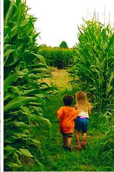 Lets get lost in a corn maze :)