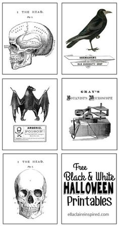 Creative Free Halloween Printables Black and White Halloween Printables from Ella Claire Inspired. Also 31 FREE Halloween Printables on Frugal Coupon Living. Halloween freebies for kids, adults and the home. (Halloween Crafts For Adults) Retro Halloween, Halloween Tags, Casa Halloween, Halloween Class Party, Vintage Halloween Images, Halloween Prints, Halloween 2020, Halloween Projects, Diy Halloween Decorations