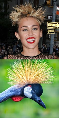 MILEY CYRUS - CRAZY NEW HAIRDO - SEPARATED AT BIRTH BIRD!