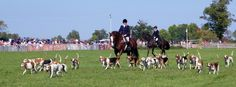 "Genesee Valley Hunt Races, Geneseo, New York. Master of the Hounds and the ""Whip"" Photo by James L. Root"