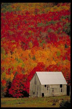 Old Barn with beautiful Fall colors. Fall in New Brunswick, Canada. Beautiful World, Beautiful Places, New Brunswick, All Nature, Fall Pictures, Old Barns, Canada Travel, Belle Photo, Fall Displays