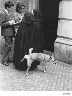 Very bad dog! Say 120 Hail Mary's! Old Pictures, Old Photos, Funny Pictures, Tierischer Humor, Funny Animals, Cute Animals, Vintage Dog, Vintage Photographs, Mans Best Friend