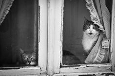 Many people say that cats aren't as affectionate with their owners as dogs, but these cats definitely look like exceptions. We collected this list of cats waiting by windows for their owners to return to show you that cats can also show us love and affection in their own way.