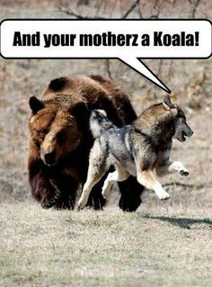 Image result for funny dog and wolves
