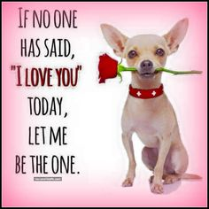 """If no one has said """"I Love You"""" today, let me be the one! Chihuahua Quotes, Chihuahua Love, Chihuahua Puppies, Dog Quotes, Animal Quotes, Chihuahuas, Funny Quotes, I Love Dogs, Puppy Love"""
