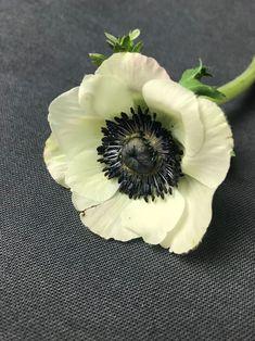 Anemone im Frühling White Anemone, Ikebana, Bloom, Plants, Desktop, Bouquet, Spring, Flowers, Street