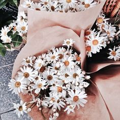 ❃ ❁ daisy petals to throw down isle put in flower girl basket ❁ ❃ May Flowers, Wild Flowers, Beautiful Flowers, Fresh Flowers, Plants Are Friends, No Rain, Planting Flowers, Floral Arrangements, Life Inspiration