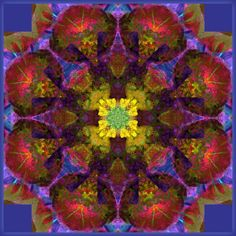 All IS One Mandala Photography by ALAYA GADEH  at ArtistRising.com