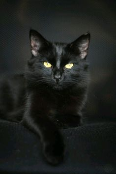 My next cat is going to be a black cat. Black cat's are good luck in Japan, FYI.