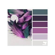 design seeds   for all who ♥ color ❤ liked on Polyvore featuring backgrounds, design seeds and color