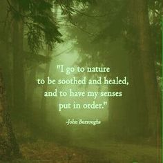 quotes about nature and life - Google Search…