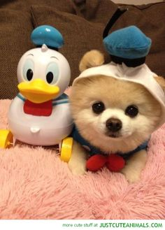 15 Absolutely Adorable Animals In Costumes