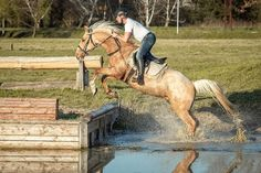 Mike Akhal Teke, Horses For Sale, Palomino, Show Horses, Horse Riding, Hungary, Equestrian, Racing, Animals