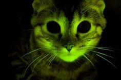 Kittyyy
