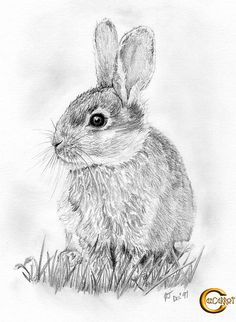 Pencil portrait of a rabbit by cazcarrot (ready to take on the world... maybe), via Flickr