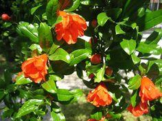 Biljke za vrt i park (cvijeće, grmlje i drveće)