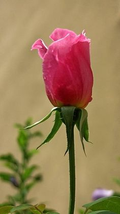 """""""My heart is, and always will be, yours."""" this is for you my darling...think of this when gardening...............s"""