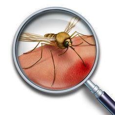 How to avoid mosquito bites..full blog http://patchupkit.com/how-to-avoid-mosquito-bites/