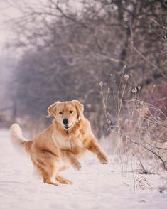 """""""Our snow dance worked! 5-10cm of white fluffy good stuff expected over night! Woohoo! -"""""""