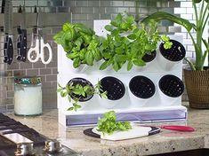 LUV this indoor herb garden Herb Garden In Kitchen, Garden Pots, Garden Ideas, Building Raised Garden Beds, Herb Farm, Desktop, Succulent Wall, Herbs Indoors, Indoor Planters