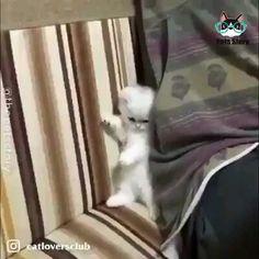 The Cutest Kittens Ever 😘-- The Cutest Kittens Ever 😘 FunpetAZ Funpetaz Cute Animal Videos Cute kitten video Cute Kittens, Cutest Kittens Ever, Cute Kitten Gif, Cute Funny Animals, Cute Baby Animals, Funny Cute, Funny Cat Memes, Funny Dogs, Funny Babies