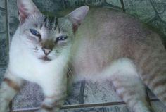 Tinho lindo. Meu gatinho.