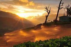 台中市和平區福壽山農場的日落
