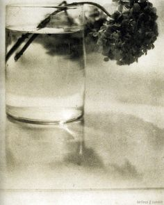 still Life, photographed by Baron A. de Meyer, c.1908